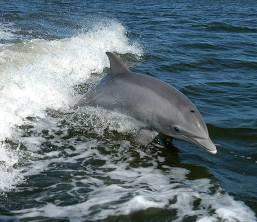 Heavy-Pollution-Leads-Mekong-Dolphins-to-Extinction-2