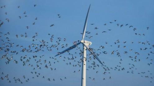 wfarmsbirds