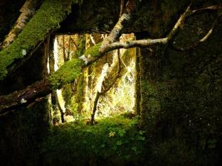 naturewindow1